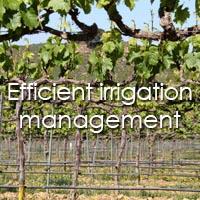 efficient irrigation management